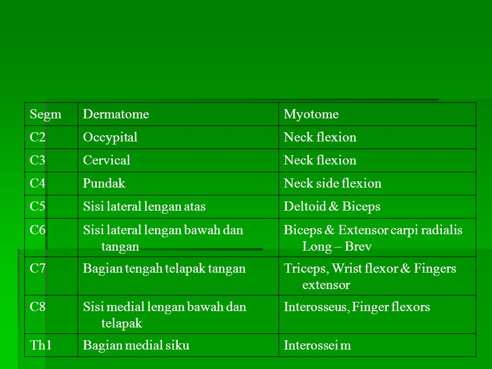 Segm Dermatome. Myotome. C2. Occypital. Neck flexion. C3. Cervical. C4. Pundak. Neck side flexion.