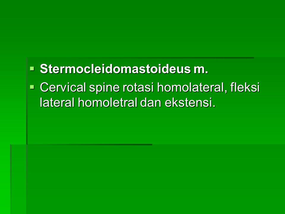 Stermocleidomastoideus m.