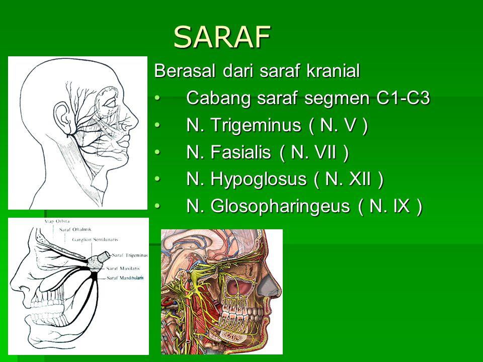 SARAF Berasal dari saraf kranial Cabang saraf segmen C1-C3