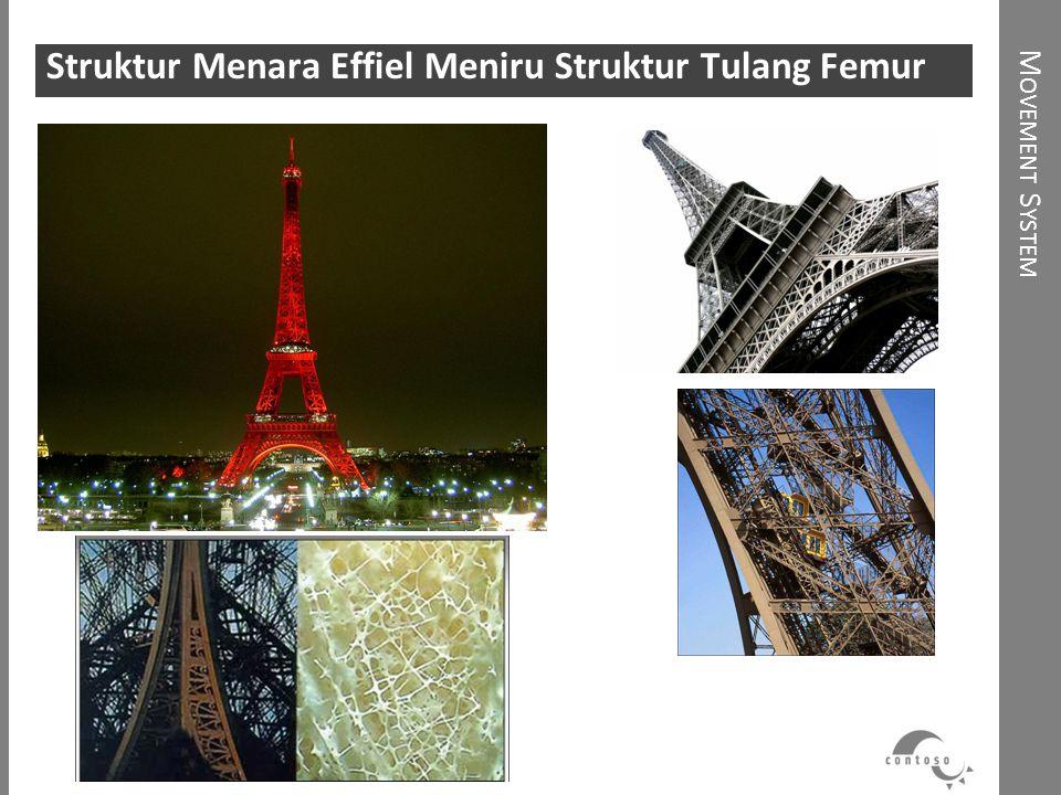 Struktur Menara Effiel Meniru Struktur Tulang Femur