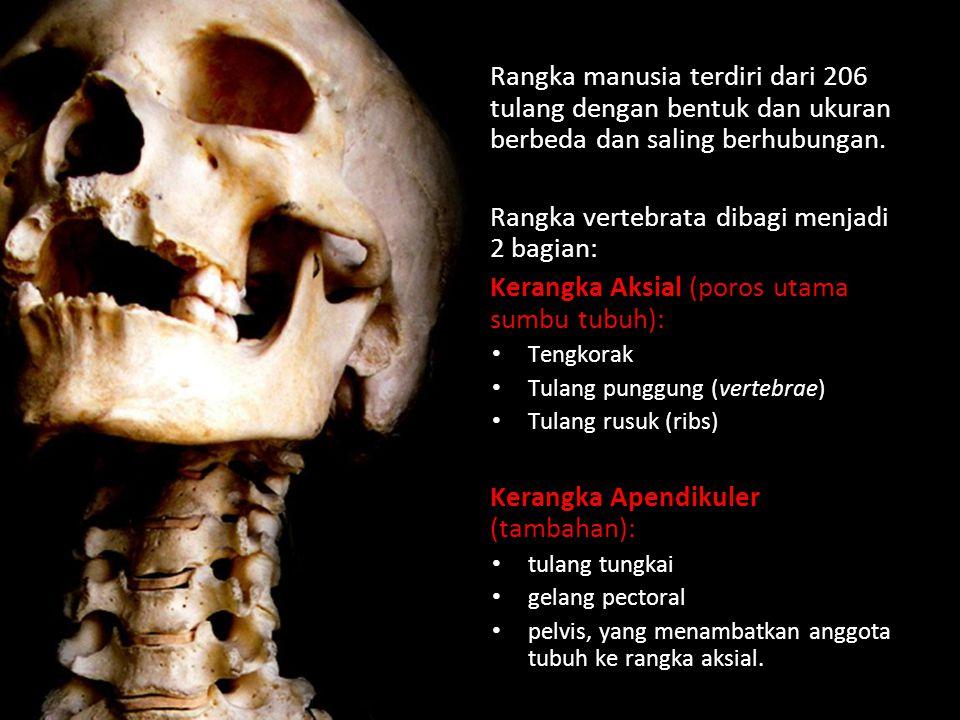 Rangka vertebrata dibagi menjadi 2 bagian: