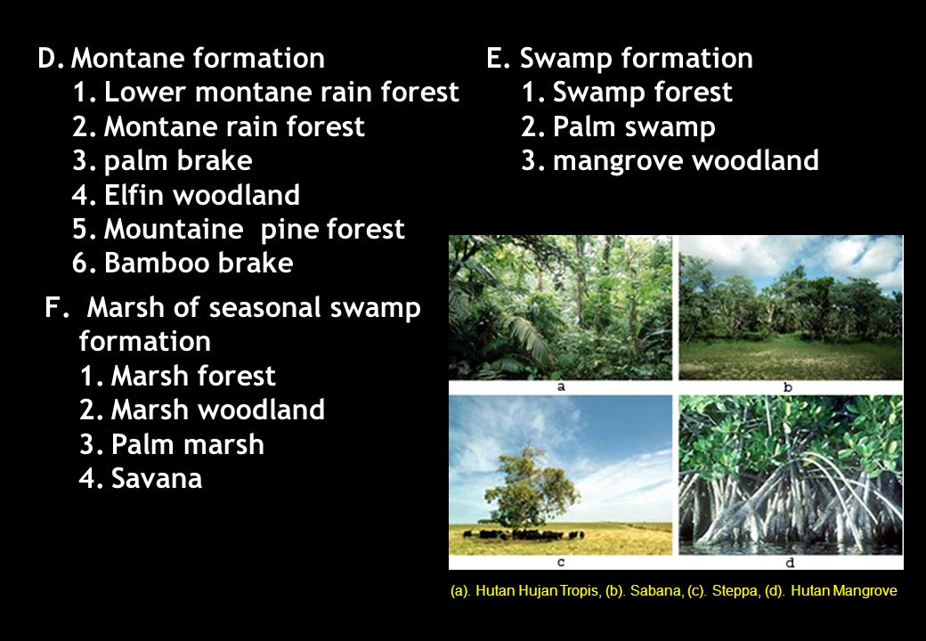 1. Lower montane rain forest 2. Montane rain forest 3. palm brake