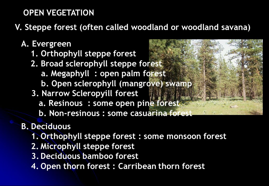 OPEN VEGETATION V. Steppe forest (often called woodland or woodland savana) A. Evergreen. 1. Orthophyll steppe forest.