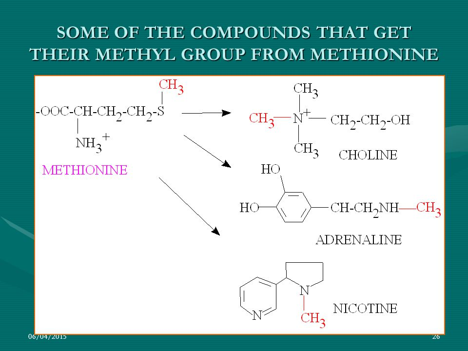 SOME OF THE COMPOUNDS THAT GET THEIR METHYL GROUP FROM METHIONINE