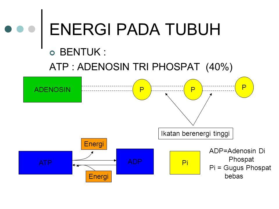 ENERGI PADA TUBUH BENTUK : ATP : ADENOSIN TRI PHOSPAT (40%) ADENOSIN P
