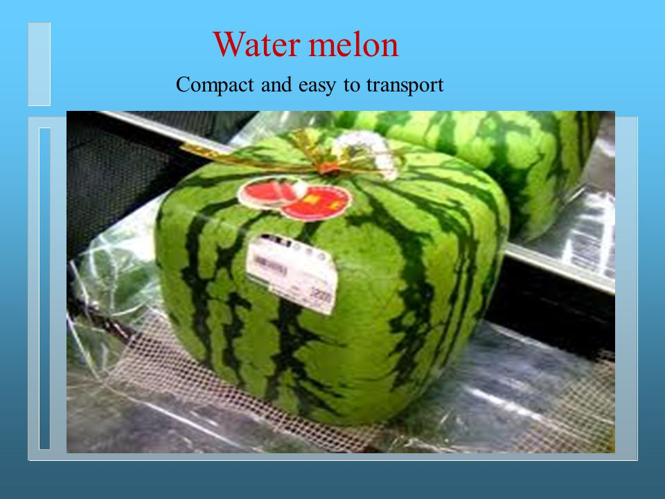 Water melon Compact and easy to transport