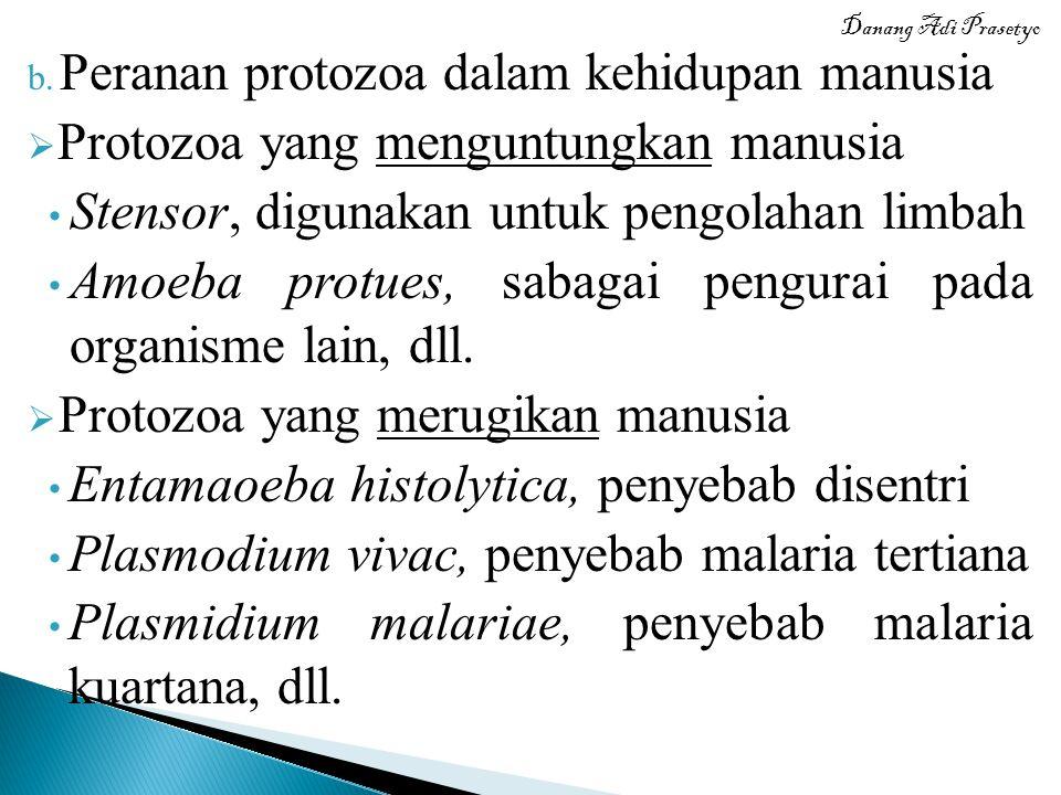 Peranan protozoa dalam kehidupan manusia