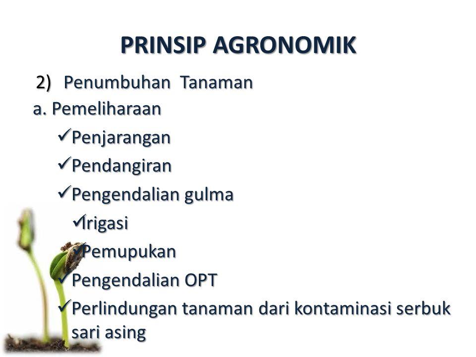 PRINSIP AGRONOMIK Penumbuhan Tanaman a. Pemeliharaan Penjarangan