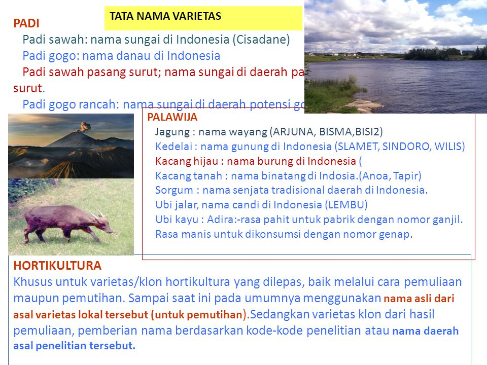 Padi sawah: nama sungai di Indonesia (Cisadane)