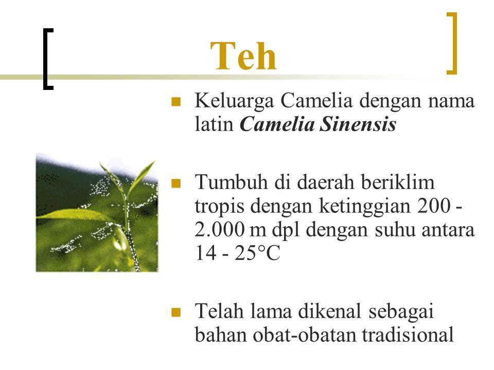 Teh Keluarga Camelia dengan nama latin Camelia Sinensis