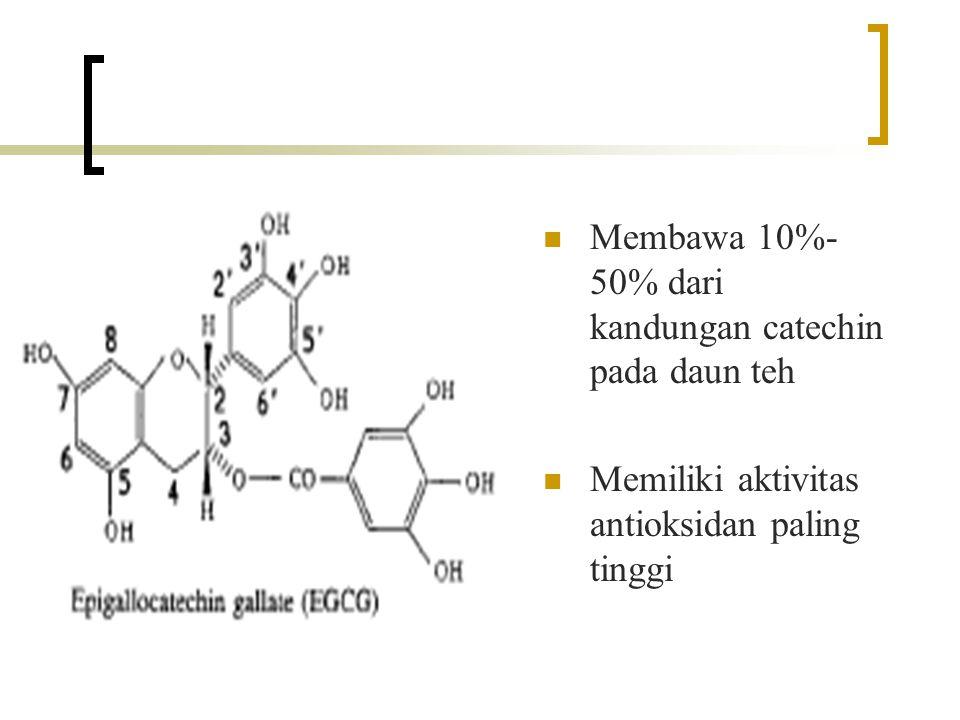 Membawa 10%-50% dari kandungan catechin pada daun teh