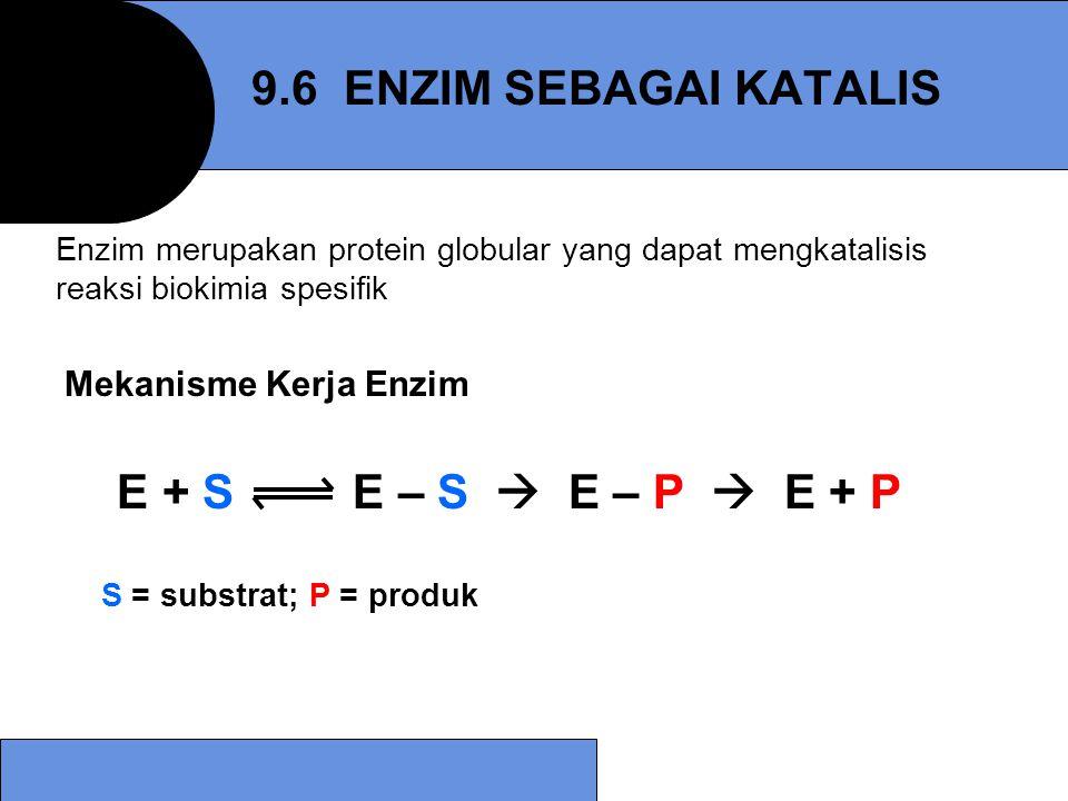 9.6 ENZIM SEBAGAI KATALIS E + S E – S  E – P  E + P
