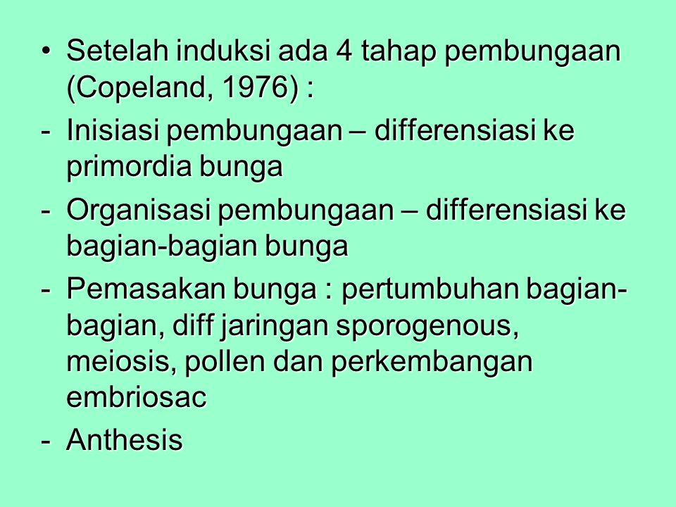 Setelah induksi ada 4 tahap pembungaan (Copeland, 1976) :