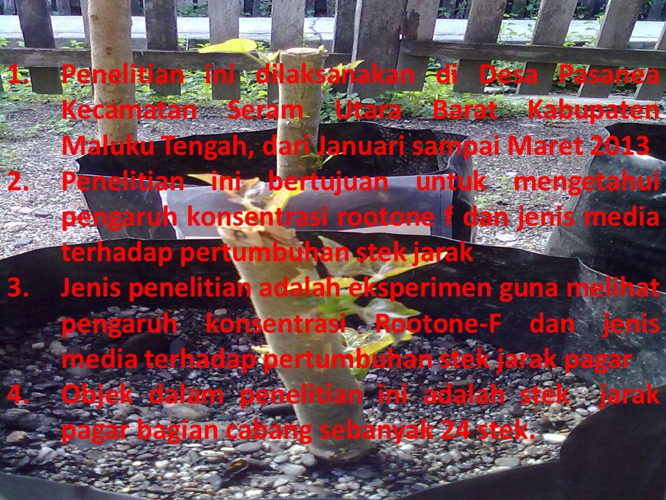 Penelitian ini dilaksanakan di Desa Pasanea Kecamatan Seram Utara Barat Kabupaten Maluku Tengah, dari Januari sampai Maret 2013