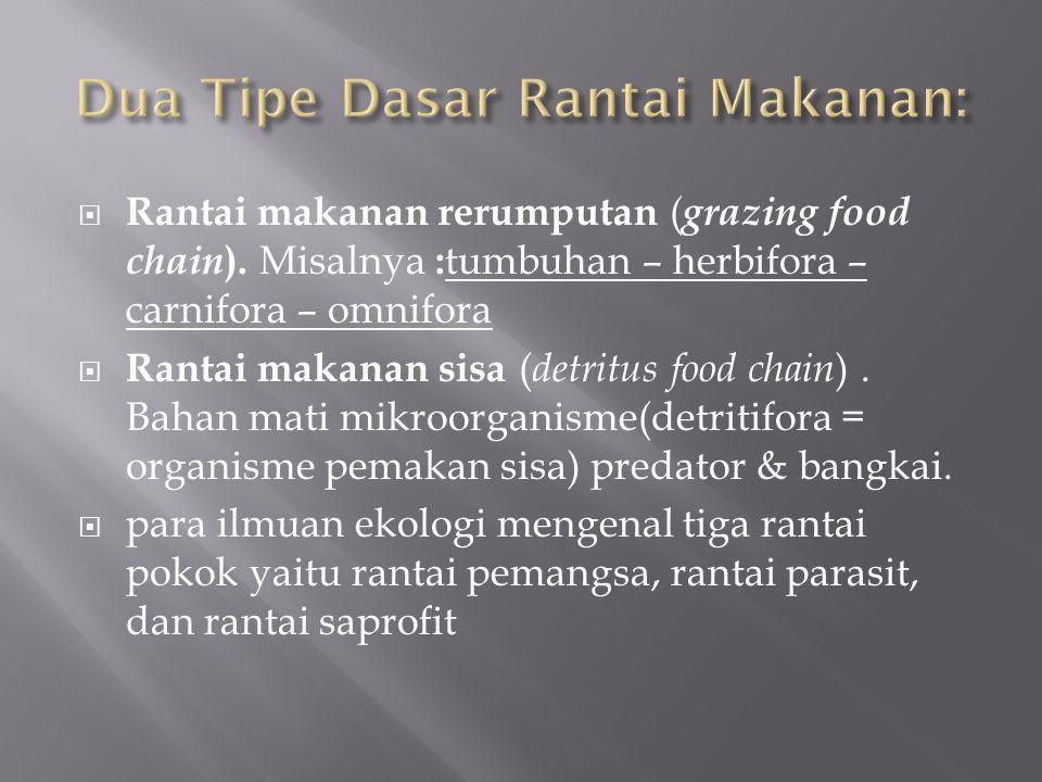 Dua Tipe Dasar Rantai Makanan: