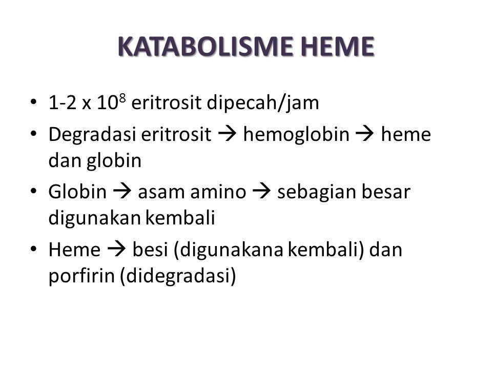 KATABOLISME HEME 1-2 x 108 eritrosit dipecah/jam
