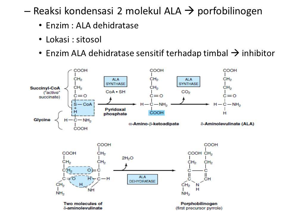 Reaksi kondensasi 2 molekul ALA  porfobilinogen