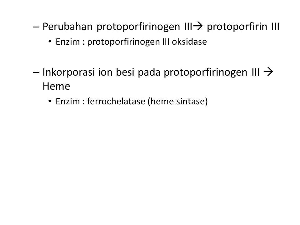 Perubahan protoporfirinogen III protoporfirin III
