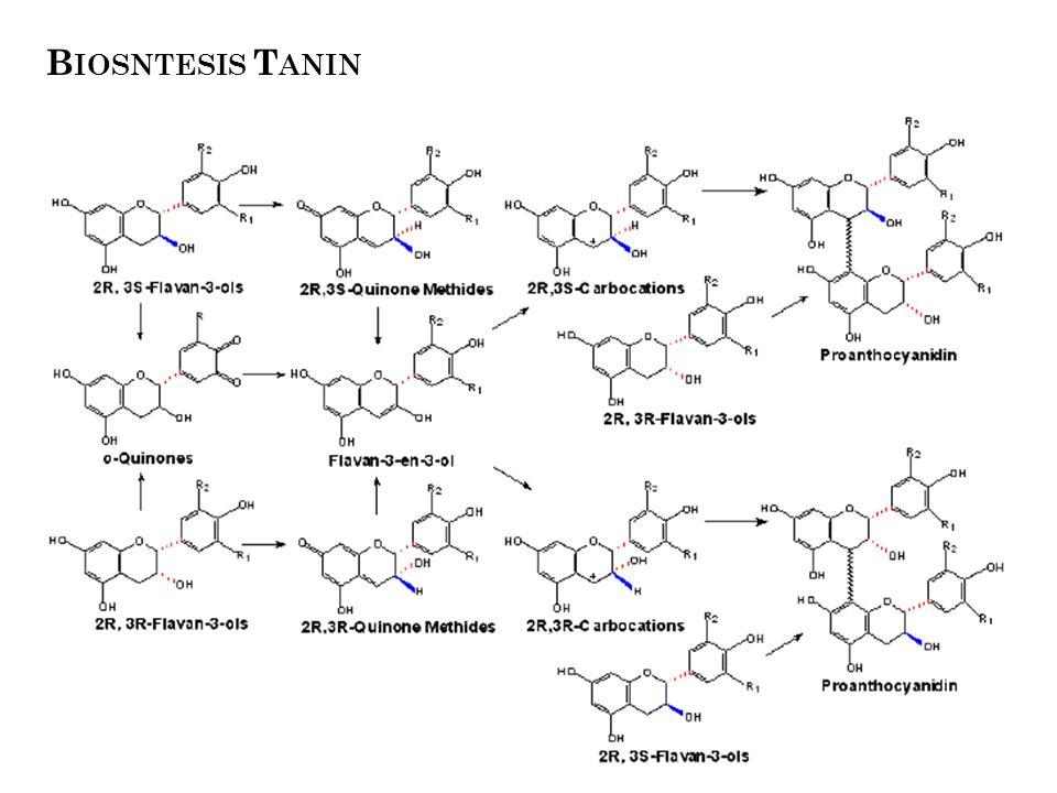 Biosntesis Tanin dik