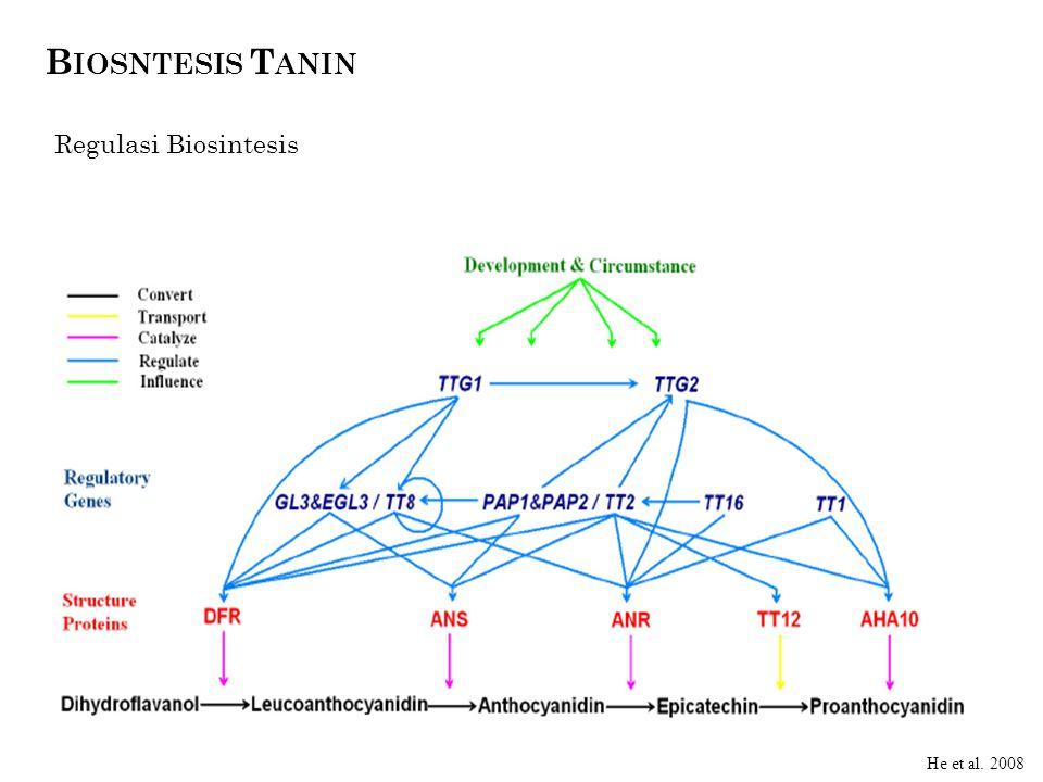 Biosntesis Tanin Regulasi Biosintesis dik He et al. 2008