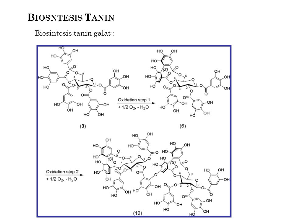 Biosintesis tanin galat :