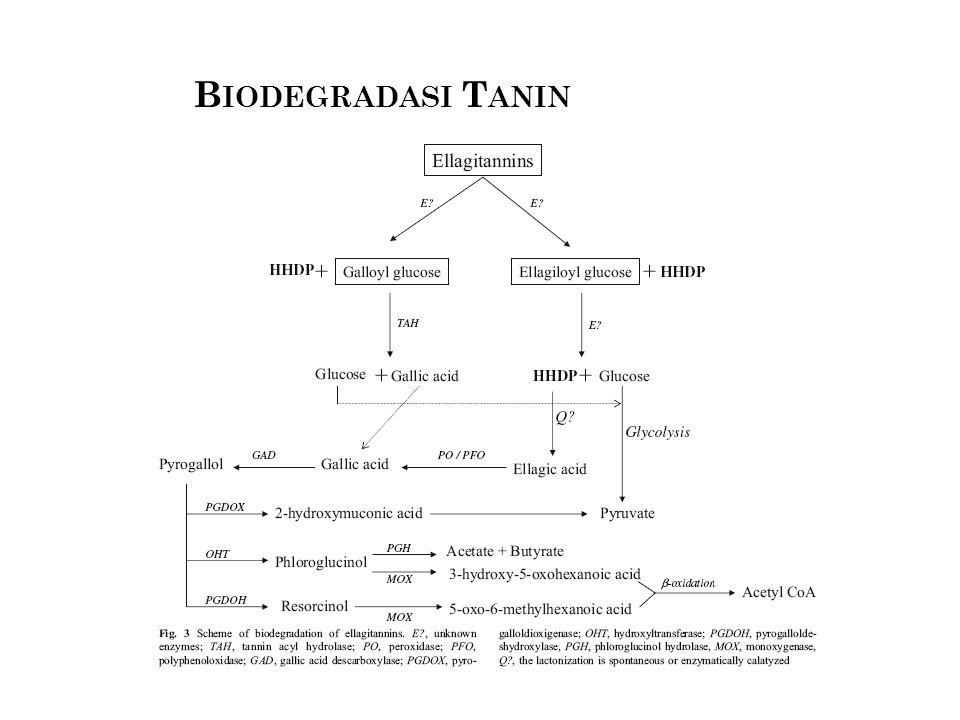 Biodegradasi Tanin