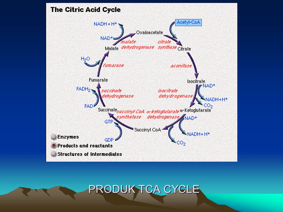 PRODUK TCA CYCLE