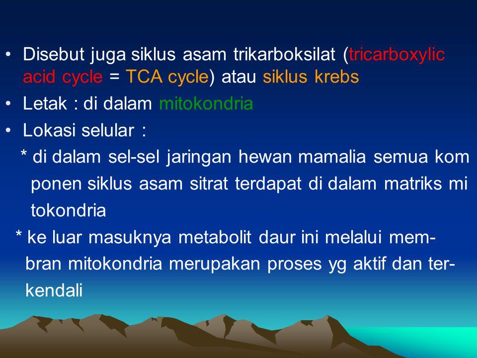 Disebut juga siklus asam trikarboksilat (tricarboxylic acid cycle = TCA cycle) atau siklus krebs