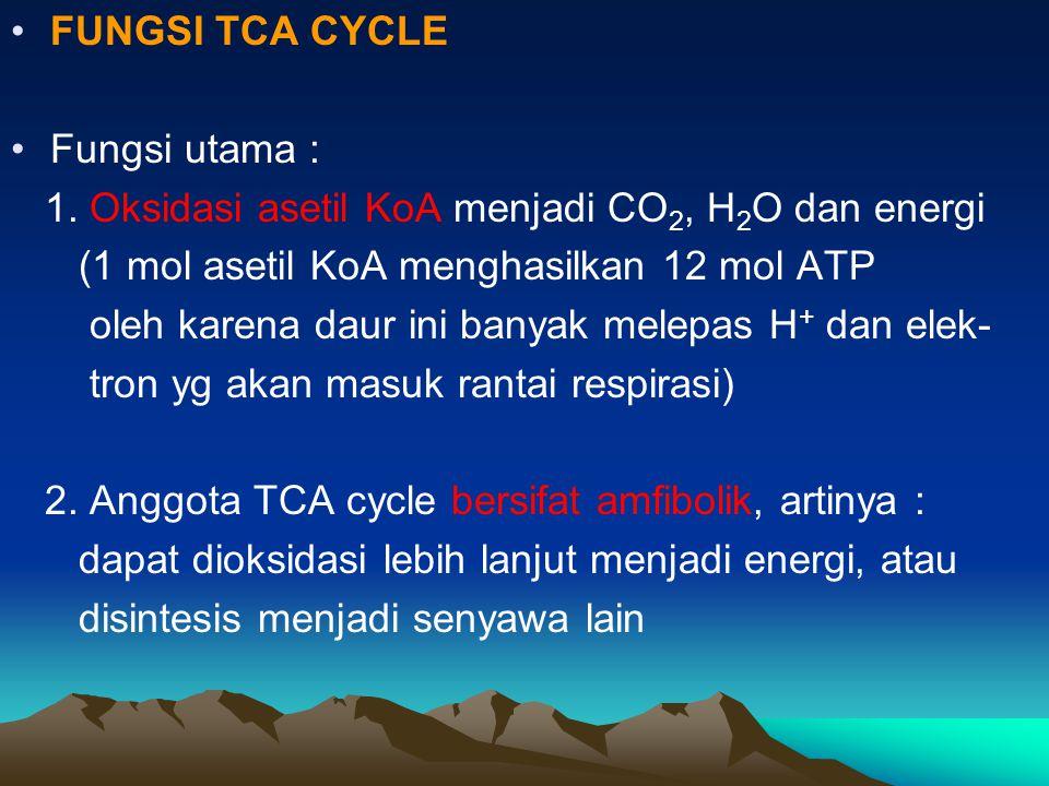 FUNGSI TCA CYCLE Fungsi utama : 1. Oksidasi asetil KoA menjadi CO2, H2O dan energi. (1 mol asetil KoA menghasilkan 12 mol ATP.