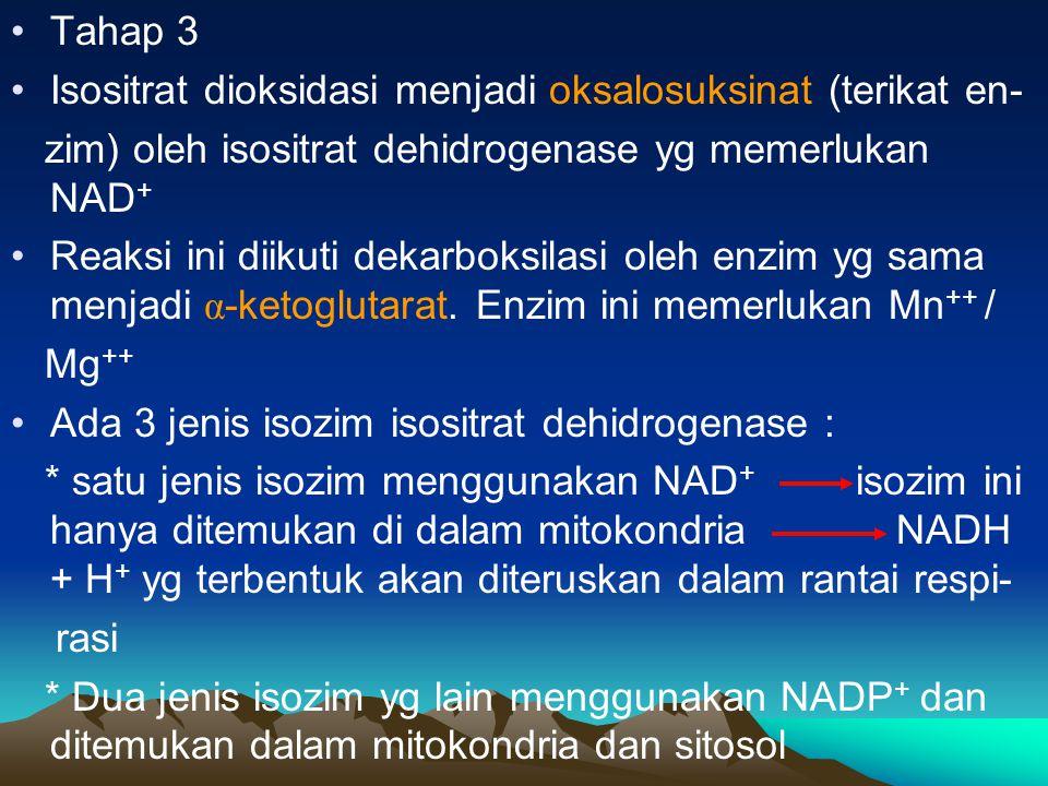 Tahap 3 Isositrat dioksidasi menjadi oksalosuksinat (terikat en- zim) oleh isositrat dehidrogenase yg memerlukan NAD+