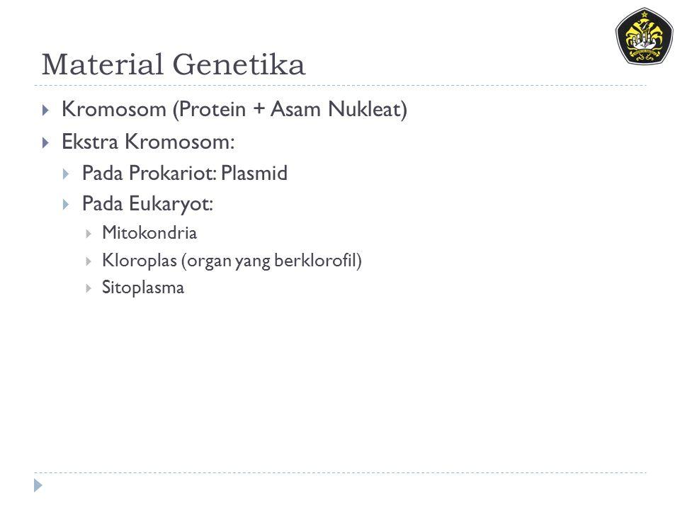 Material Genetika Kromosom (Protein + Asam Nukleat) Ekstra Kromosom: