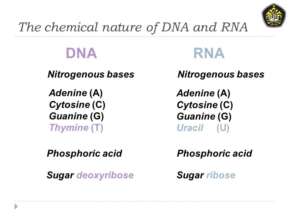 The chemical nature of DNA and RNA