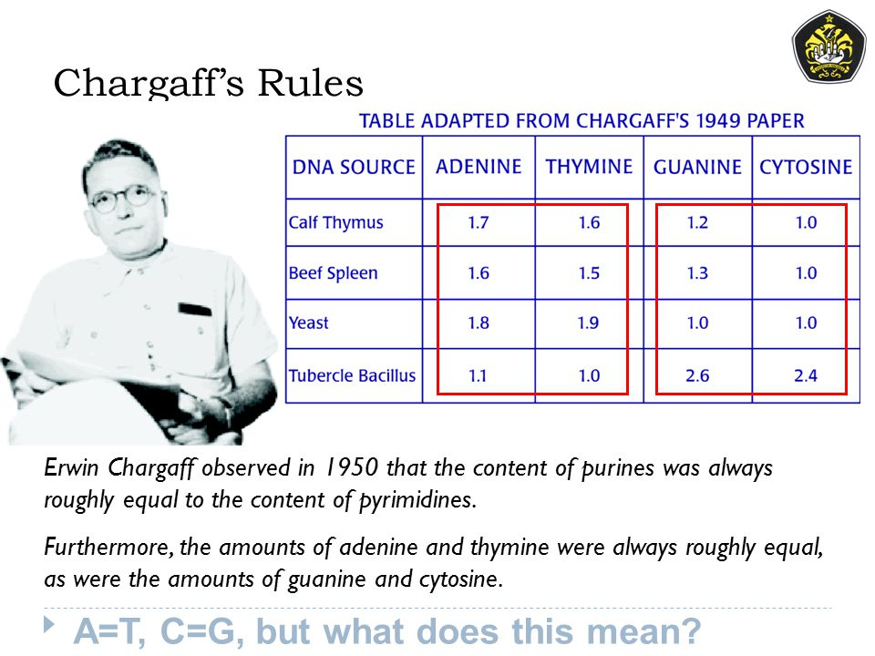 Chargaff's Rules A=T, C=G, but what does this mean