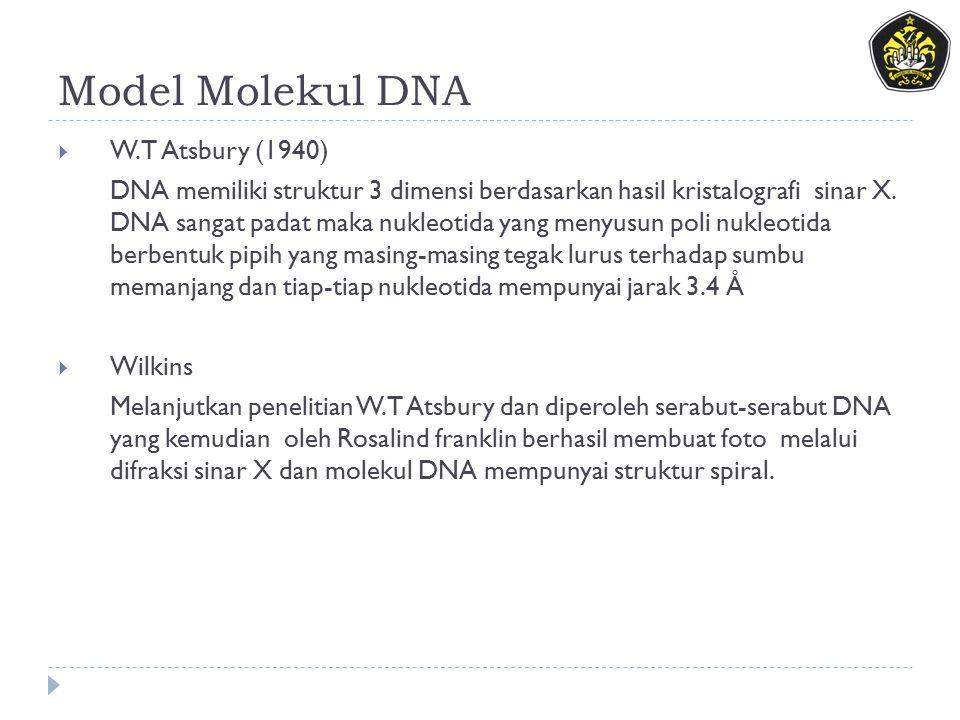 Model Molekul DNA W.T Atsbury (1940)