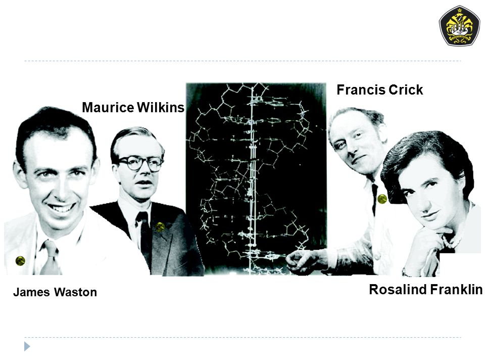 Francis Crick Maurice Wilkins Rosalind Franklin James Waston