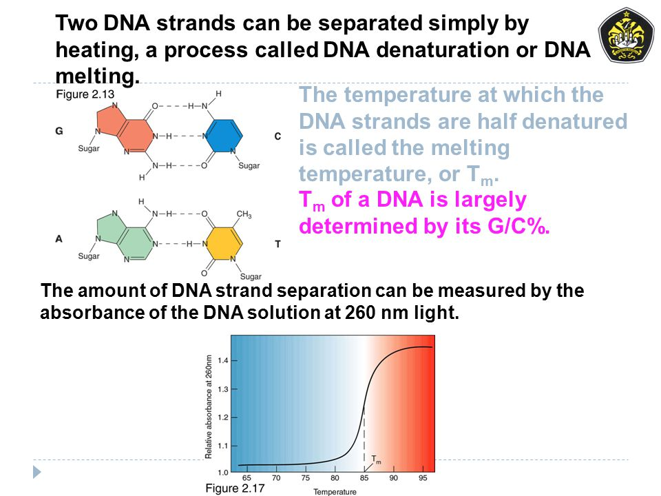 Tm of a DNA is largely determined by its G/C%.