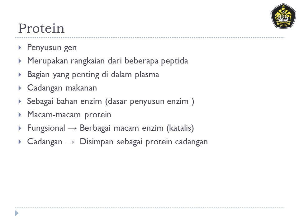 Protein Penyusun gen Merupakan rangkaian dari beberapa peptida