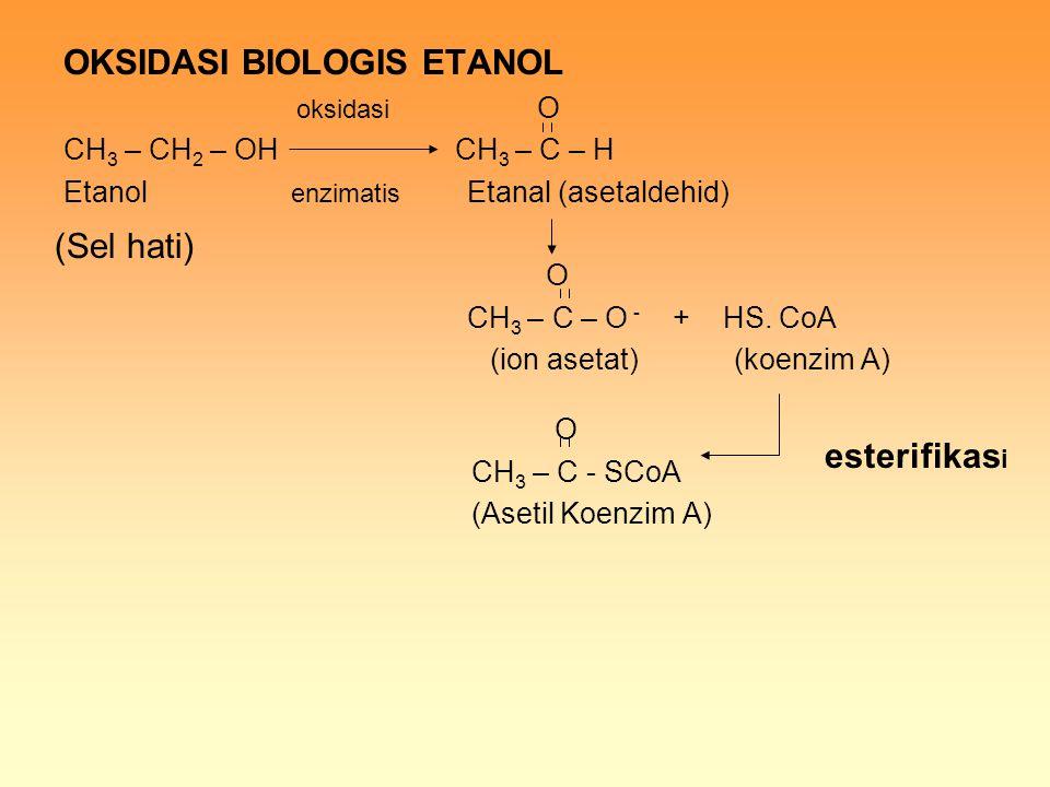 OKSIDASI BIOLOGIS ETANOL