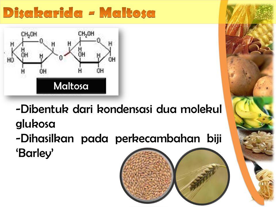 Disakarida - Maltosa Dibentuk dari kondensasi dua molekul glukosa