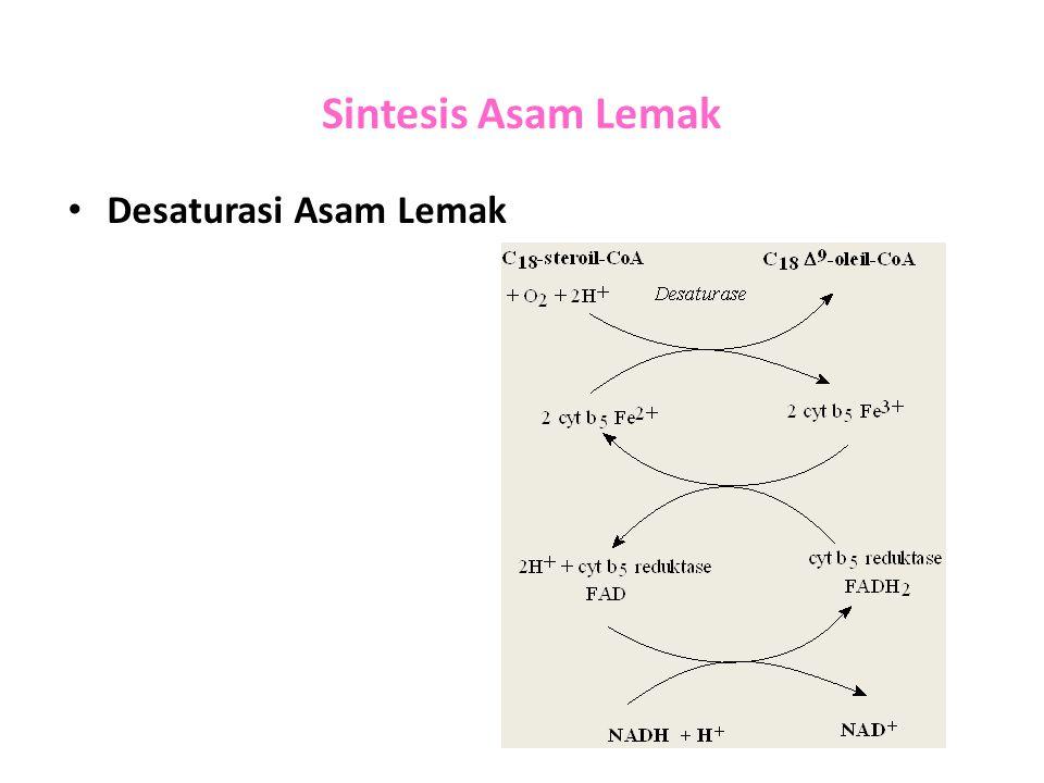 Sintesis Asam Lemak Desaturasi Asam Lemak