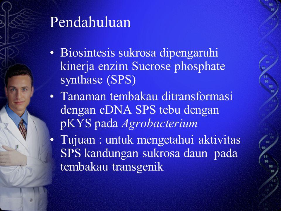 Pendahuluan Biosintesis sukrosa dipengaruhi kinerja enzim Sucrose phosphate synthase (SPS)