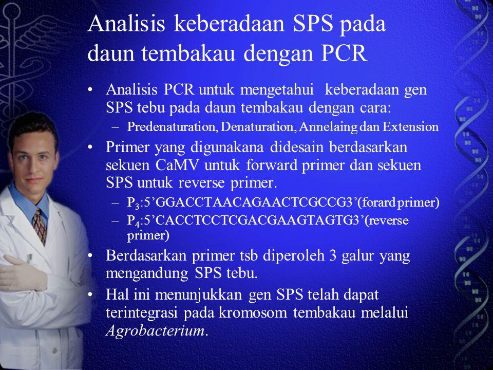Analisis keberadaan SPS pada daun tembakau dengan PCR