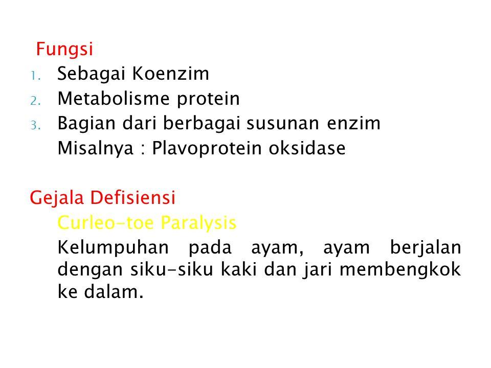 Fungsi Sebagai Koenzim. Metabolisme protein. Bagian dari berbagai susunan enzim. Misalnya : Plavoprotein oksidase.