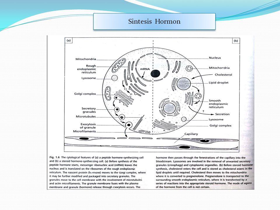 Sintesis Hormon