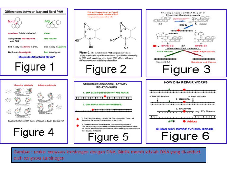 Gambar : reaksi senyawa karsinogen dengan DNA