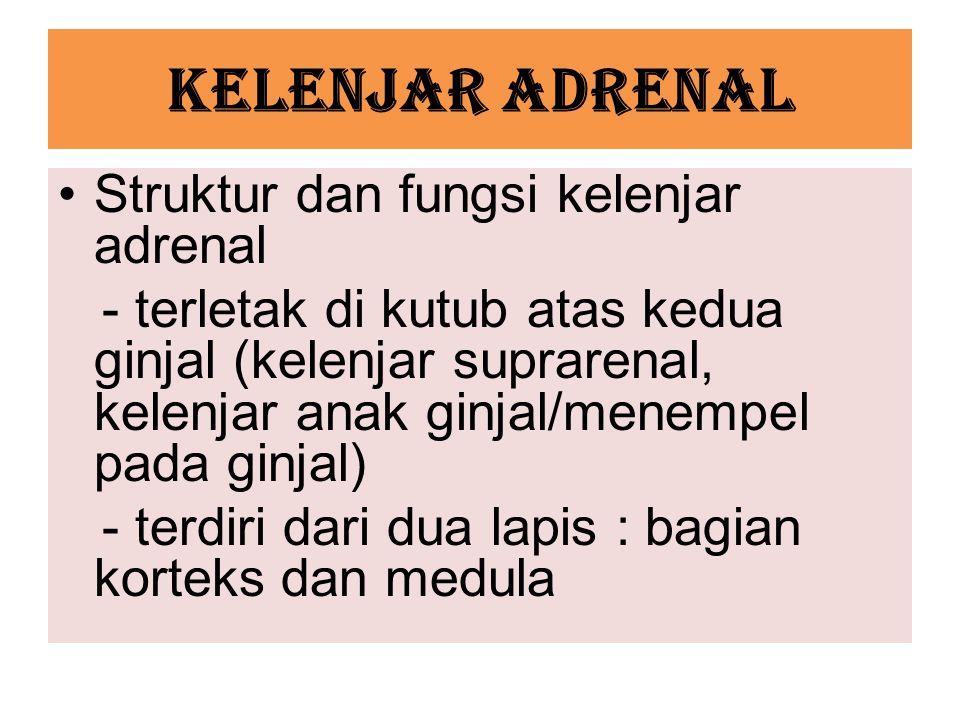 KELENJAR ADRENAL Struktur dan fungsi kelenjar adrenal