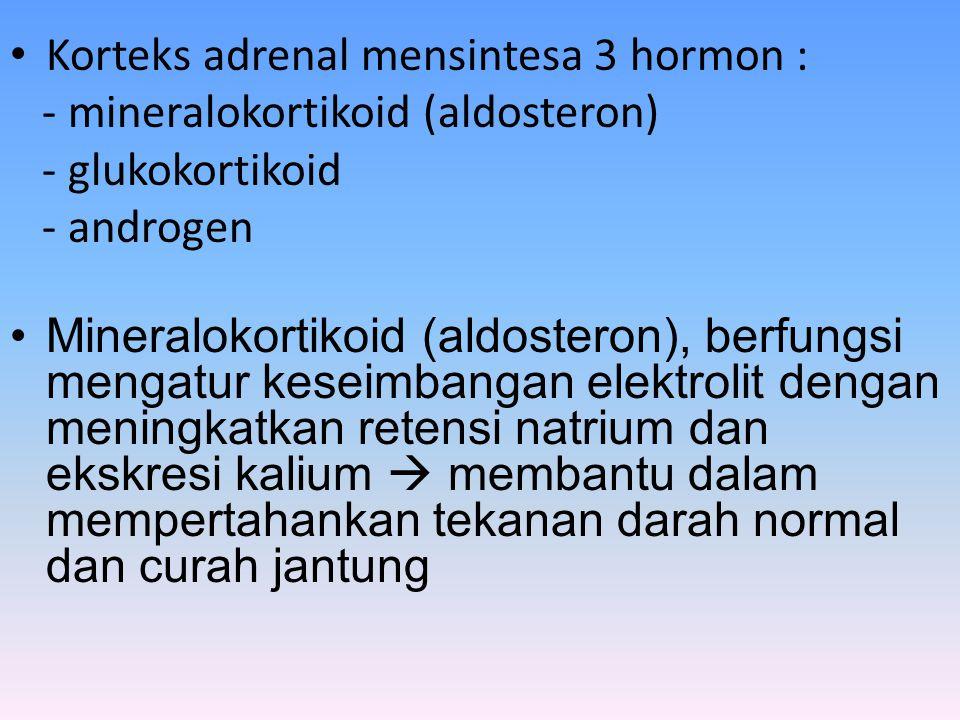 Korteks adrenal mensintesa 3 hormon :