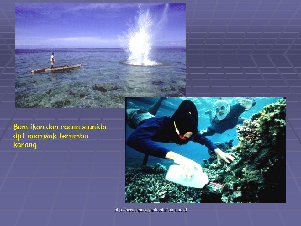 Bom ikan dan racun sianida dpt merusak terumbu karang