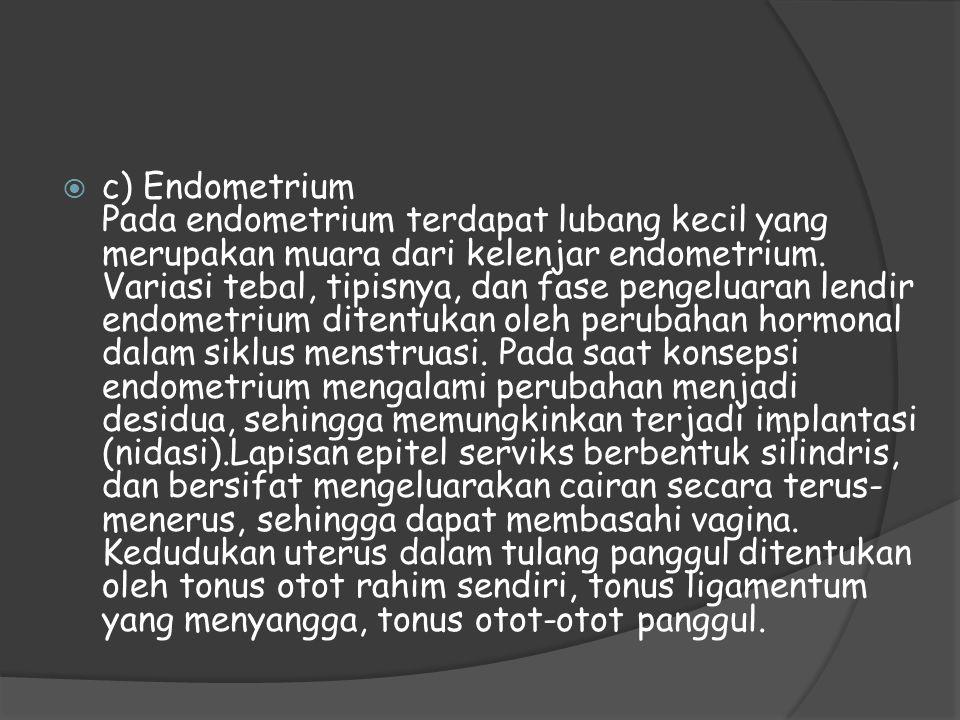 c) Endometrium Pada endometrium terdapat lubang kecil yang merupakan muara dari kelenjar endometrium.