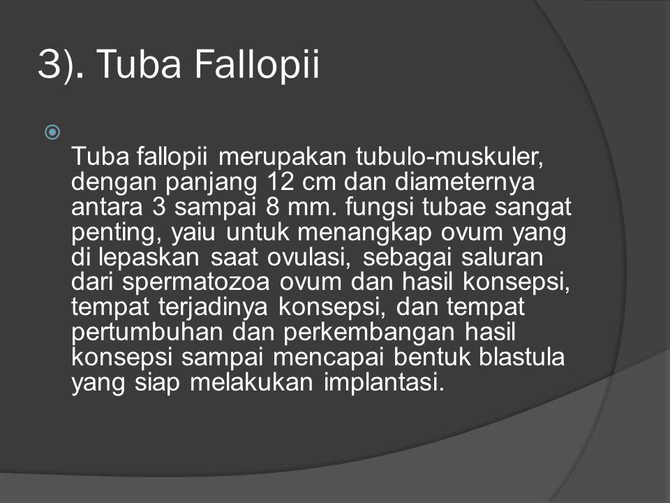 3). Tuba Fallopii